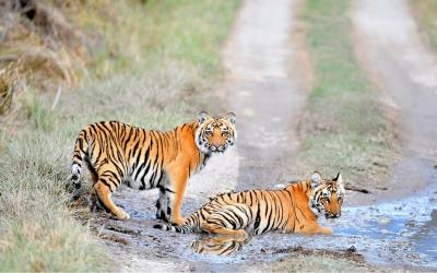 Panna Tiger Safari MP